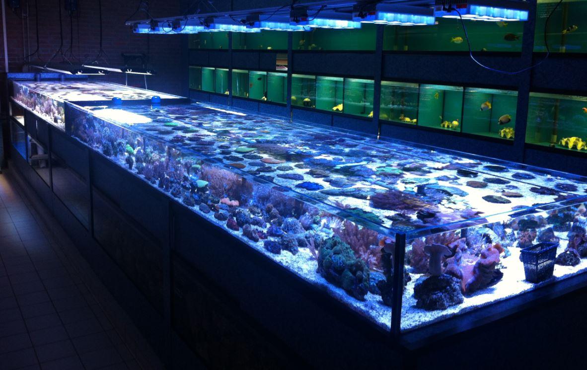 Aquarium Kopen Winkel Vissen Online Zoetwater   Review Ebooks