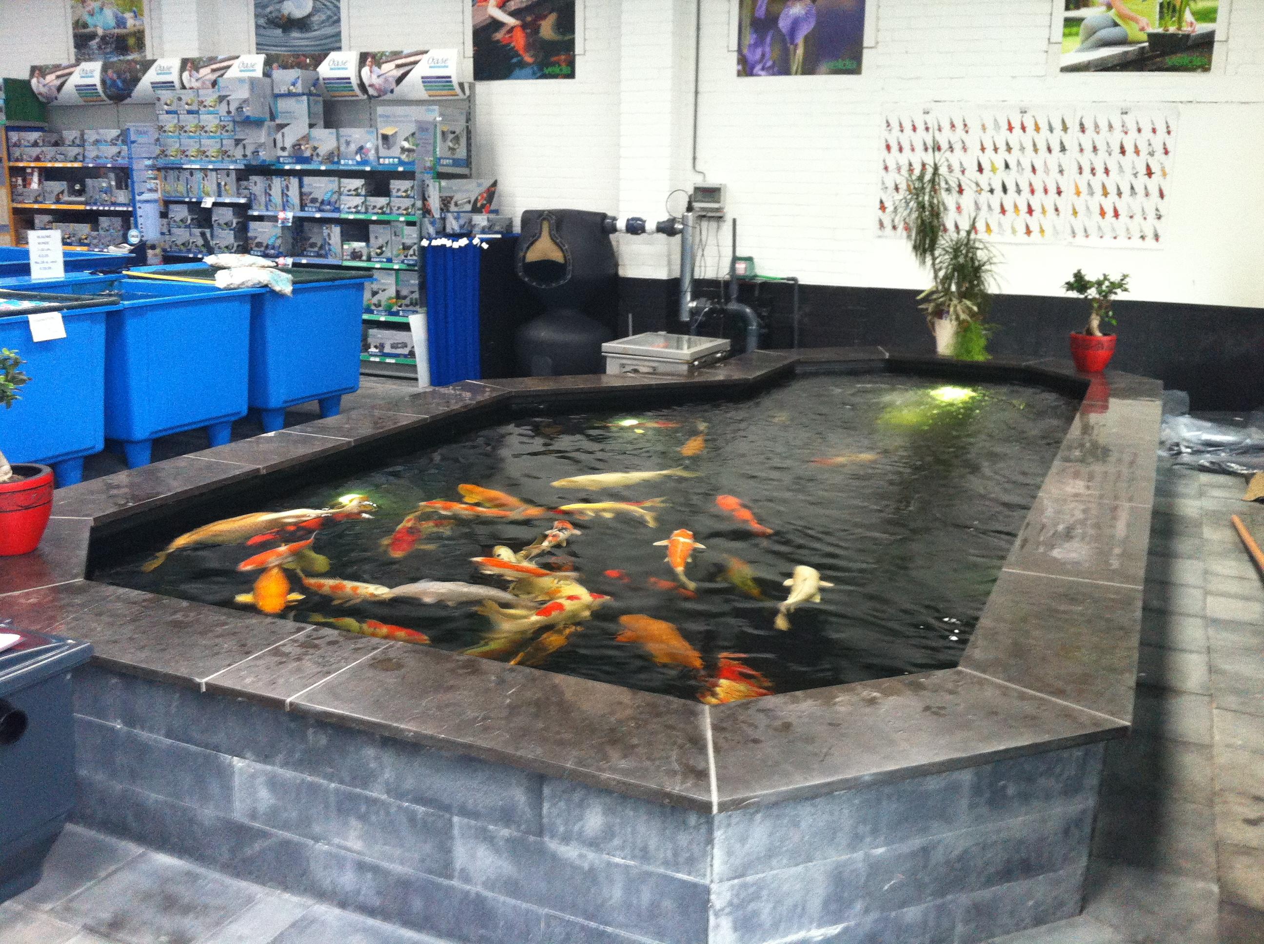Vijver aanleggen brouwers vijver specialist for Zwemvijver benodigdheden